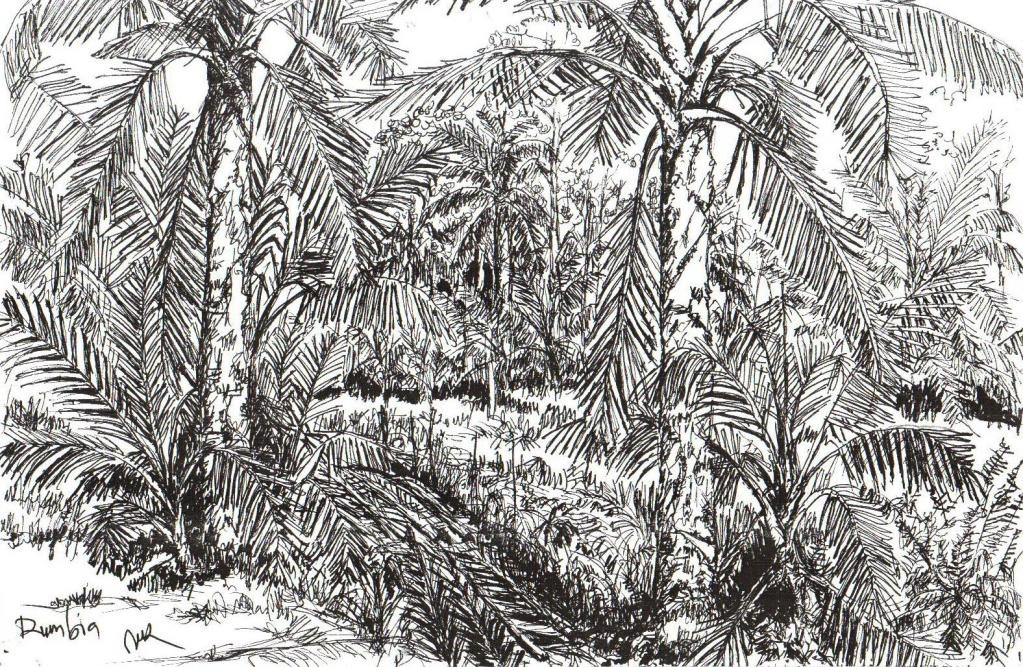 The digital copy of an unknown Chinese illustrator's sketch of a sago plantation - somewhere in Mukah (?)...